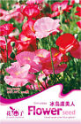 Original Package 100 Lceland Poppy Seeds Papaver Nudicaule Flowers A098