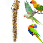 Stainless Steel Spiral Feeder Birds Parrot Pet Food Fruit Holder Toy Calm