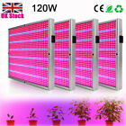 UK 1/2/4Pcs 120W LED Grow Light For Hydroponic Flower Veg Plants + Grow Glasses