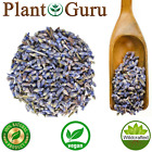 Lavender Flower Buds Dried Fresh Bulk Wholesale Lavandula x Intermedia