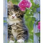 Cat's Whisper DIY full square Diamond painting embroidery craft  Home Decor