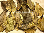 L-XL Catappa Leaves Indian Almond Leaves Discus Betta Crystal Red Cherry Shrimp