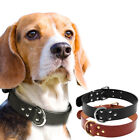 Genuine Real Leather Dog Collar Studded with D Ring for Dog Walking Training