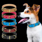 Plain Leather Dog Collar for Small Medium Dogs Jack Russell Terrier Beagle XS-M