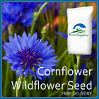 Cornflower Seeds - MEADOW ANNUAL WILDFLOWER BLUE FLOWER EASY GROW