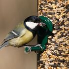 Wild Bird Seed Feed Mix, Feed Year Round, Suits all feeders!