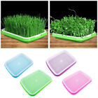 Seed Sprouter Tray Seed Germination Tray 2-layer Micro Greens Seedling Tool Kit