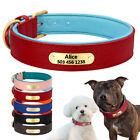 Dog Collar Personalised Genuine Leather Dog Collar Neoprene Padded for Pit Bull
