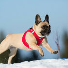 curli dog fashion & accessories-vest harnesses - leashes - belts by swiss design