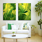 Green Banana Leaves Quality Canvas Prints Set Of 2 READY TO HANG Choice Of Clock