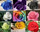 9 Color Colorful Seeds Rainbow Rose Seed Home Garden Flower LOVER Free Shipping
