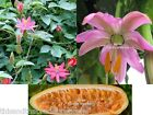 Passion Banana mollissima Seeds! Passiflora Fast Shipping From USA!
