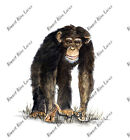 AFRICAN CHIMPANZEE CHIMP VINYL AUTO RV WINDOW BODY GLASS DECAL STICKER ART GIFT