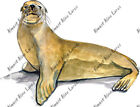 Harbor Harbour Arctic Seal Zoo Animals Auto Boat RV Camper Vinyl Decal Sticker