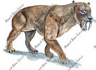 Sabertooth Cat Tiger Smilodon Auto Truck Car RV Window Body Vinyl Decal Sticker