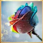 DIY 5D Diamond Painting Rose Flower Embroidery Craft Mosaic Stitch Home Decor