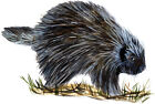 Porcupine Sticker Decal Home Office Dorm Wall Exclusive Art Tablet CPU Cell HD