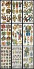 *VIOLETTE*JOHN GROSSMAN'S Assorted Sticker Sheets Your Choice SANTA CAT DOG&more