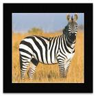 African Wildlife - Print 4 Matted Mini Poster