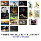 POSTERS ANIMALS - WOLF,GIRAFFE,CAT,ELEPHANT,GECKO,HORSES, CHOOSE IMAGE and SIZE