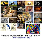 POSTERS ANIMALS - LEOPARD, BIRDS, LYNX, LION HEAD ,HORSES, CHOOSE IMAGE and SIZE