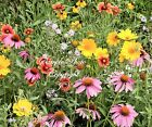 Serendipity's Southern Garden Wildflower seeds Mix Lot of Color! Butterflies LUV