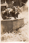 DN942 Photographie Photo vintage Snapshot animal chat cat portrait flou blurry