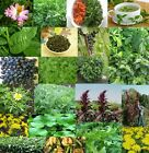 Food Garden Greens - Many varieties, Rare Edible Yummy Easy grow - Seeds