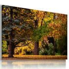 SKY TREE FOREST AUTUMN Perfect View Canvas Wall Art Picture Large L549 X