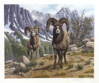 """Rocky Mountain Bighorn by Bo Newell 20x23.5""""  Signed Print"""