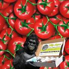 TOMATOES VEGETABLES DIP APE HYDROGRAPHIC WATER TRANSFER HYDRO DIPPING DIP KIT