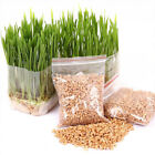 20g/30g Harvested Cat Grass Seeds Organic Cat snack Pet Supplies Grass Seed