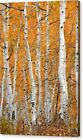 Aspen Grove Autumn Fall Trees Professional Photograph Print Photo Poster Canvas