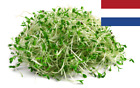 Sprouting Seeds - Microgreens - Organic - Bio - Microgreen Broccoli
