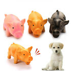 Cute Pig Grunting Squeak Latex Pet Chew Toys for Dog Squeaker Chew Training UK