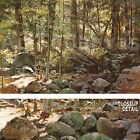 "36""x24"" SUNLIT FOREST (YOSEMITE) by JEROME GRIMMER PEACEFUL LANDSCAPE CANVAS"
