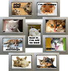 New, Quality Fridge Magnets Cute & Funny Pet CAT, KITTENS - cute - you choose