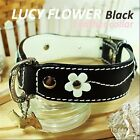 Luxury and Cute Dog Collar- Lucy Black Genuine Leather White Flower Leash