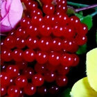 AAA 4mm-16mm Natural RARE Red Ruby Round Loose Beads Gemstone 15