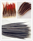 Beautiful Natural Pheasant Feathers Wholesale All Wedding Favor Craft Trimmings