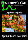PEACH LEAF CURL ORGANIC FUNGICIDE, WORM CASTINGS CONCENTRATE FOR LEAF CURL