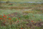 UK native Wildflower Mix for Wild Birds - Grass seed mix