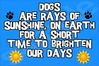 Dogs Rays Of Sunshine, For A Short Time To Brighten Our Days (L-Y) Magnet Gift