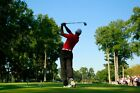 TIGER WOODS Photo Quality Poster - Choose a Size!  #28
