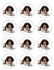 English Springer spaniel Cake Toppers Wafer&Icing cupcake x 12 Decoration