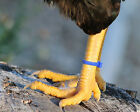 50 Zip Bands Leg Bands Multi Colors For All Poultry Sizes - Chickens,Duck,Geese