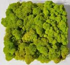 Reindeer Moss, Preserved - Spring Green (Chartreuse), 20-Ounce (1.25 Pounds) in