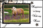 HORSE PICTURE FRAME PERSONALIZED WITH YOUR PHOTO GREAT GIFT IDEA BRAND NEW