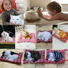 New Lovely Simulation Animal Doll Plush Sleeping Cats with Sound Kids Toy CA