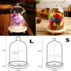 Glass Display Cloche Bell Jar Dome Flower Immortal Preservation Vase Wooden Base